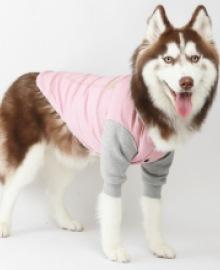 amylovespet PET CLOTHING 592964