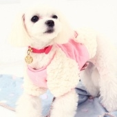 amylovespet PET CLOTHING 596290